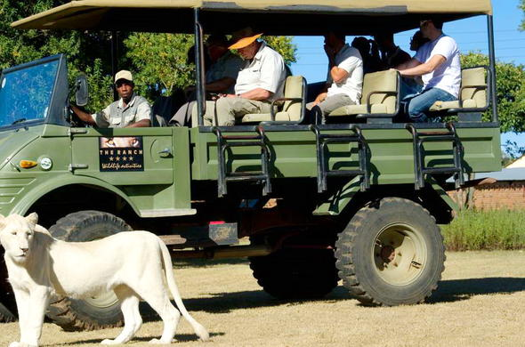 Game drive at the Protea Hotel The Ranch Resort in Polokwane.