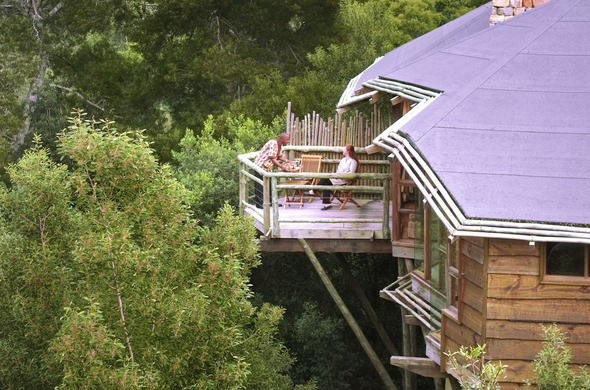 All suites have elevated balconies for optimal forest views.